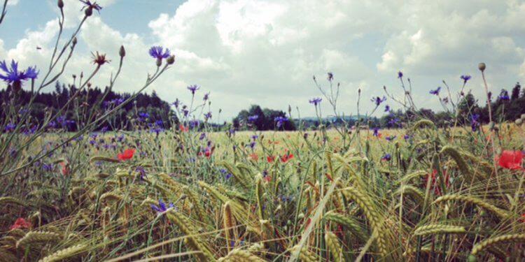 Wildkräuterwanderung und Yoga an der frischen Luft, umgeben von schöner Natur. Das gibt´s bei Yogaart Studio Rosenheim am 24. Juni 2018. Jetzt anmelden!